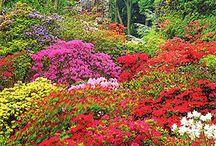 garden garden garden