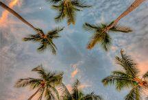 palm. / by christy.