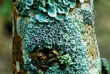 Lichen | Moss | Mousse / A compilation of different types of lichen & moss in all places