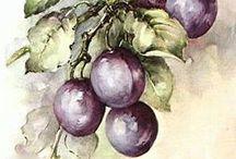Grapes watercolour