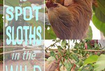 costa rica sloth collective