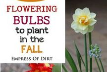 Flowering bulbs to plant in the fall