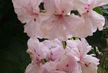gardening & flowers / Piante e fiori