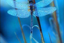 Стрекозы / Природа, насекомые, стрекозы, красивые и забавные фото, картинки, анимация, обои, видео, интересные факты
