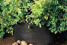 typy zahradničení / zahrada