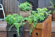 Garden Ideas :) / by Nacole Hines