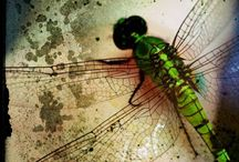 Dragonfly Collection / by JMaj
