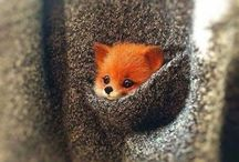 cute animals❤️