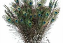 Peacocks Feathers / by Asian Ideas