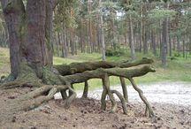 Drzewa / Las woj.zachodniopomorskie