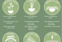 Plant Based ✨