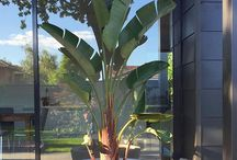 HOME | Exotic Plants
