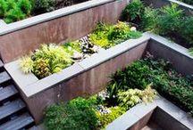 Terrasering trädgård