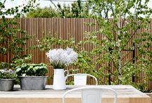 My dreaming roof garden