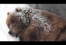 χειμερια ναρκη - hibernation