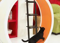 Funny furniture for pets