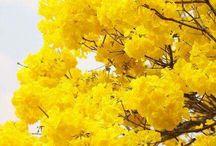 jaune|orange