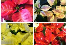 Winter Interest / When fall rolls around and most of the plants go dormant and loose their leaves, there are some that thrive and add an extra interest for the winter. Some of our favorites are here.