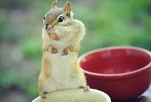 cute critters / by nancy Foreman