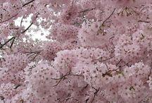 Çiçekli ağaçlar