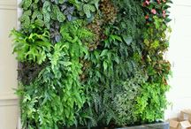 marta rośliny