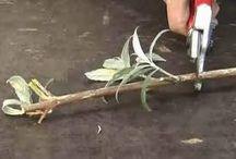 planten in huis en in de tuin