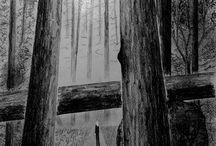 """""""L'ultima Figlia"""" / Prende il nome dal titolo del romanzo che ho pubblicato a inizio febbraio 2016, vi sto inserendo il materiale da cui ho tratto ispirazione per la stesura della trama.  Invito chi ama lasciarsi trasportare in un mondo inimmaginabile, ma ancora ancorato alla realtà, appeso al filo di un'incredibile possibilità, a leggere l'anteprima de """"L'ultima Figlia"""""""