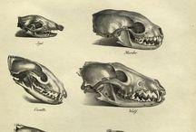 anatomia zwierząt