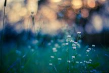 Magical Light: Bokeh