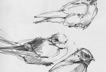 πουλακια