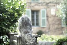 Les chats - cats arcane / Katzen - das mystische Völkchen