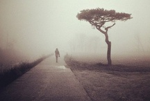 All upon a foggy night / by Jenny Lee