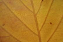 Natural Remedies/herbalism / by Jennifer Kibler