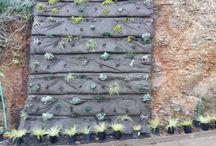 Vertical Garden in Marin / Marin Vertical Garden