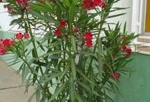 Növények gondozása