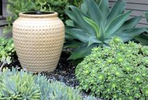 Tropical planting / Lush tropical plants