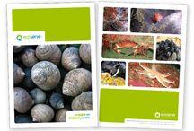 Zetagram Brochure Designs