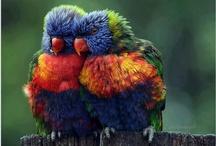 BIRDS / Butterflies