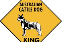 Australian Cattle Dog Signs and Pictures / Warning and Caution Australian Cattle Dog Signs. http://www.signswithanattitude.com/dog_signs/australian_cattle_dog.html