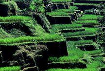 Bali Ubudo