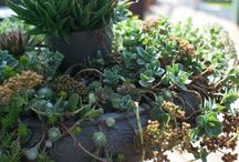 Gardening Tips / Looking for some good gardening tips? You've come to the right place!