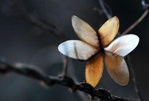 Λουλούδια Δέντρα Φυτά