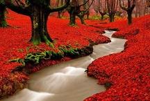 Gardens & Flowers / by Shana Wright