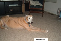 Greyhounds & Dobermans / by Dan Frazho