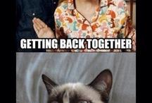 Grumpy Cat Gets His Own Board, I Love Him That Much / The Grumpster / by Vicki Bielfeldt