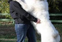 Honden Ria.