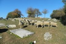 http://www.panoramio.com/photo/126950393