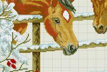 Kone / Zvierata
