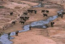 Travels - Africa