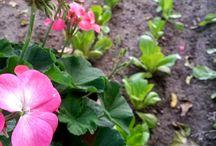 SOBEANNE / from sobeanneblog & my garden & my kitchen